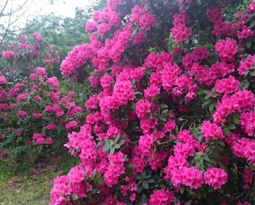 ラウンド中、きれいなお花を発見